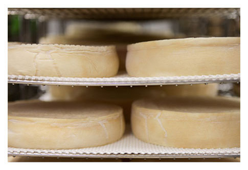 Fabrication fromage Saint-Nectaire fermier Chantaduc affinage